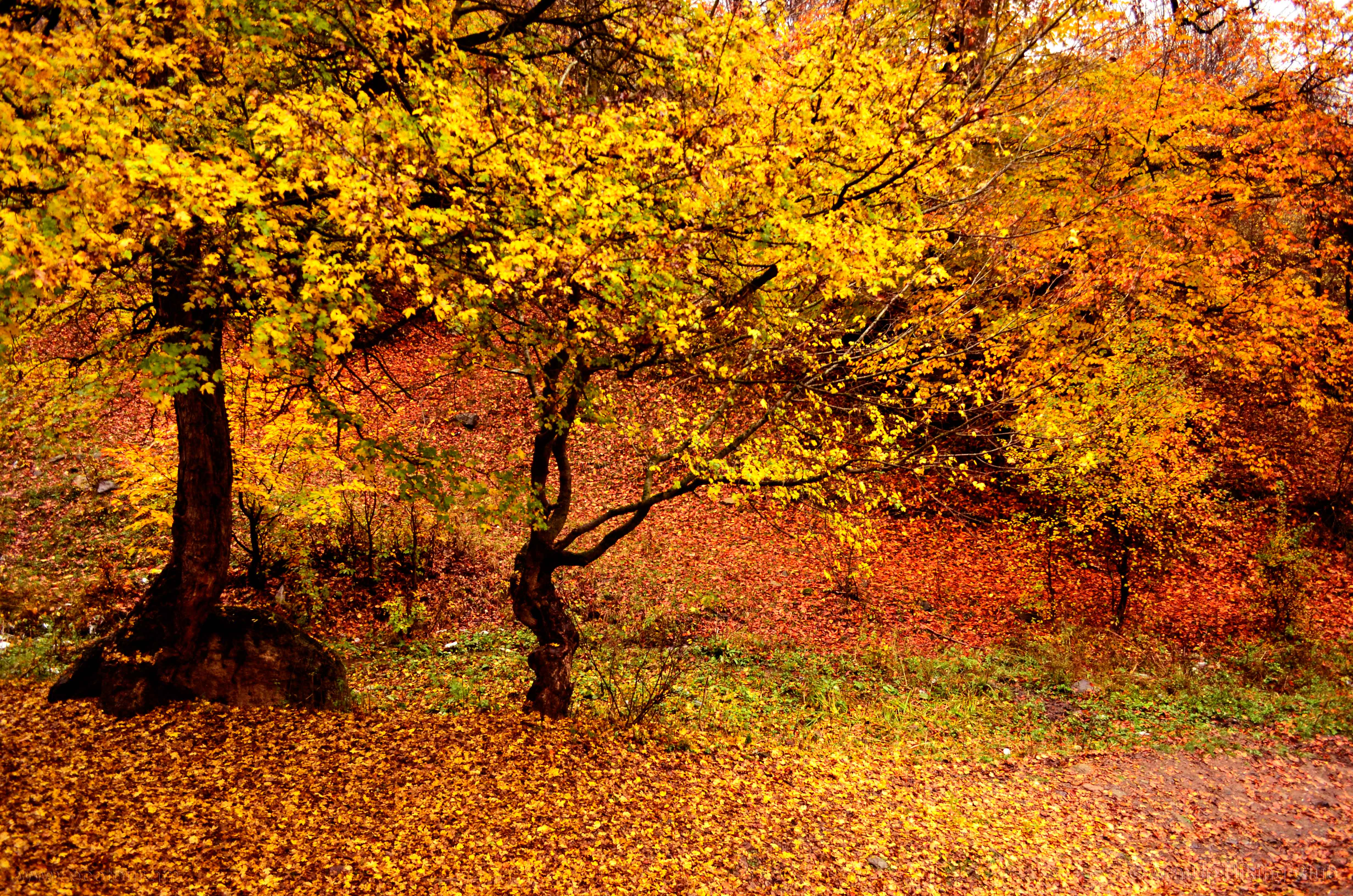 Colors of Autumn – YELLOW
