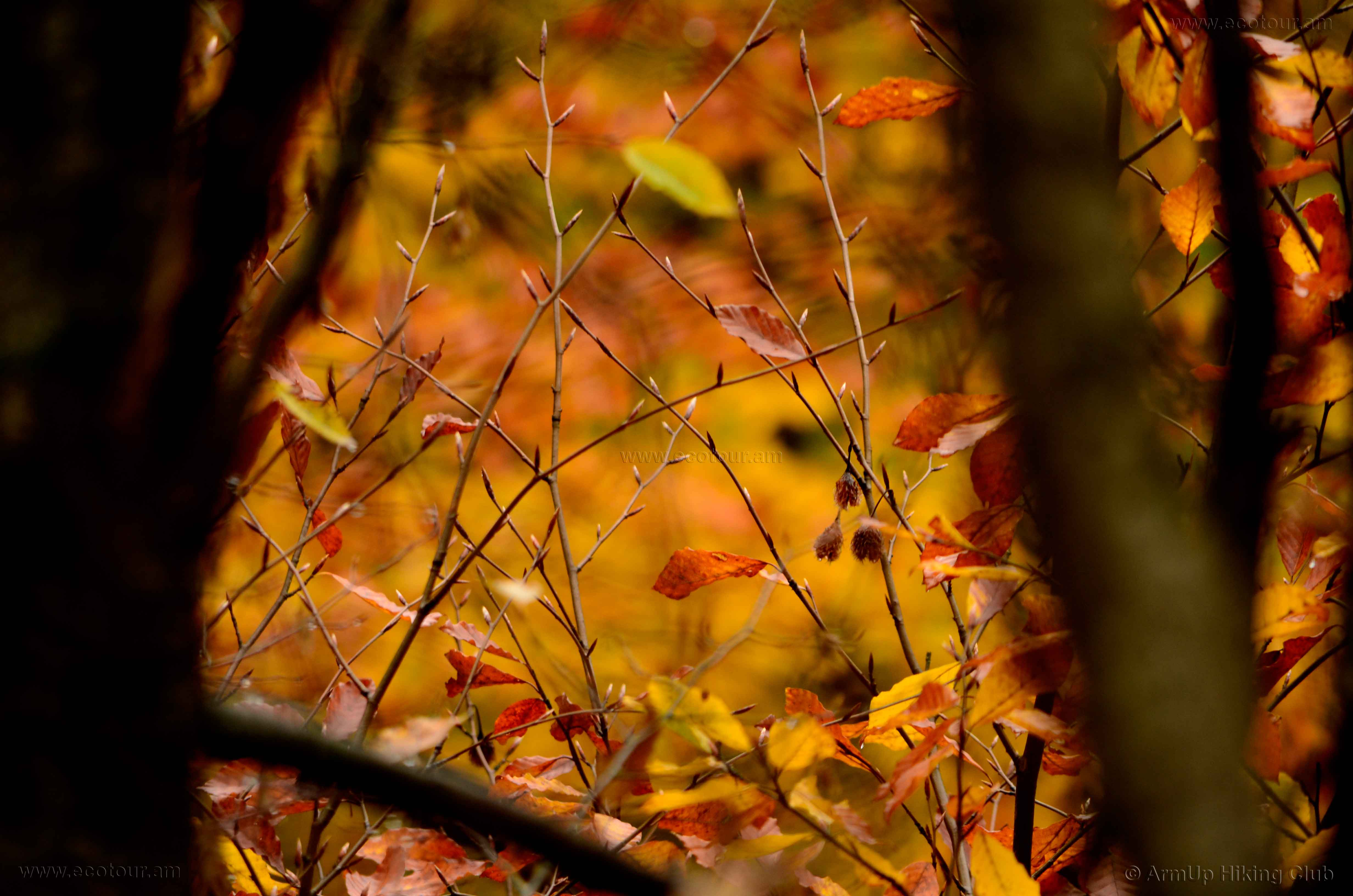 Colors of Autumn – GOLD